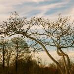 treeparkjapanforsite